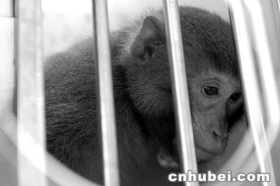 """武汉进行""""sars疫苗动物实验""""(图)"""