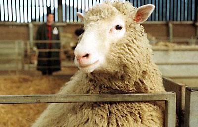 它是世界上第一例从成年动物细胞克隆出的哺乳动物