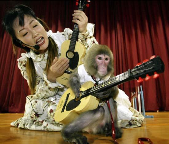 韩国靓女与猴子一起表演弹吉他