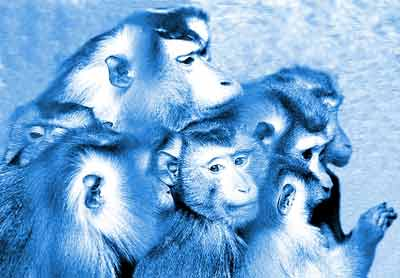 组图:金猴贺新岁 动物园的猴子表演太多有点累