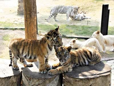情人节,广州番禺香江野生动物园畜生也疯狂?