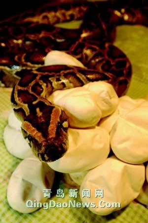 据饲养员赵建厚介绍,这条大蟒蛇是2000年从广西动物园引进的,今年已经