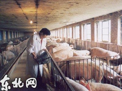解决了冬季猪舍无猪,一年养猪半年空的问题图片