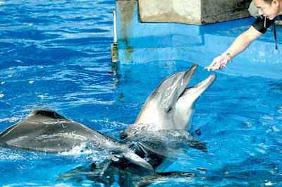 海豚吃鱼手绘图