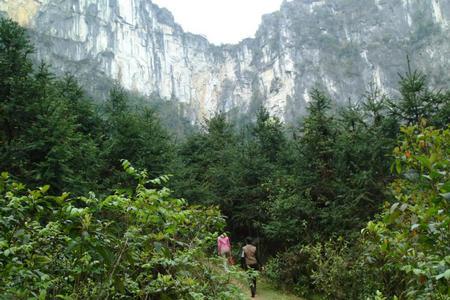上一篇: 巴马旅游风景地图册 下一篇: 巴马绿色山林中的一个村庄