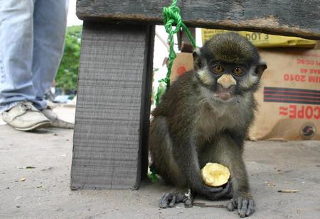 图文:刚果(金)非法野生动物贸易肆虐