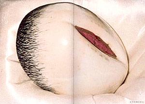 女阴-女の穴_女阴瓷酒杯(明代);; 古代日常生活中的性崇拜; 女阴瓷酒杯(明代)