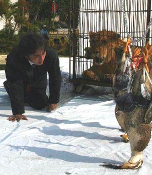 动物主题环保艺术