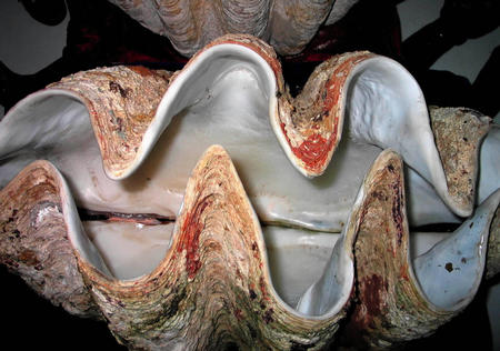 图文:海洋珍奇贝壳吸引眼球(1)