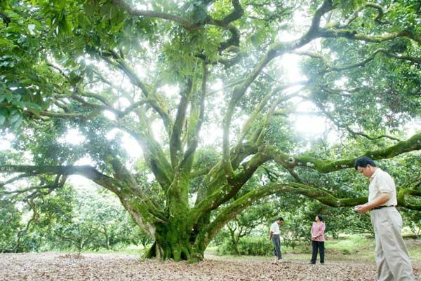 现已长成枝繁叶茂的参天大树