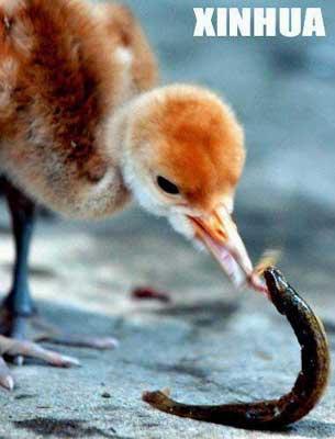组图:福州动物园 小鹤出壳
