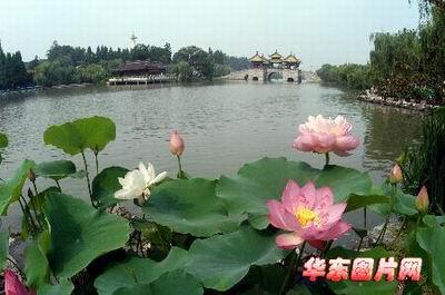 新闻频道 国内新闻    人民网7月8日电 7月8日,由中国花卉协会,扬州市