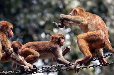 昨日中午12时许      地点:北京动物园猴山      事件:一只小猴子抓住