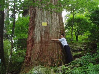 组图:天堂里的原始森林杭州临安天目山即景_新