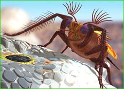 搜狐户外-图说环境:大黄蜂