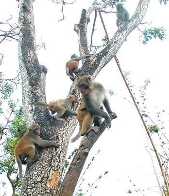 老猴子指导小猴子爬树.
