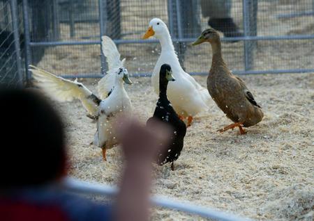 图文:动物赛跑(1)