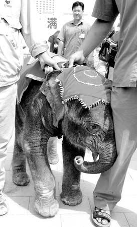 北京动物园41天小象突然夭折 征名活动被迫停止
