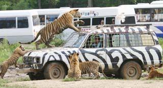 冰冻封存死虎是保护动物还是浪费资源?