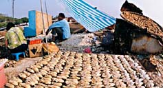 游玩:养蚝基地——流浮山