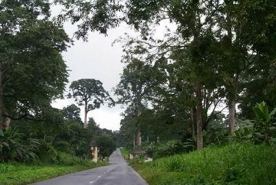 马拉博至卢巴?#39134;?#30340;热带雨林