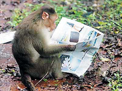 猴子读报(图)