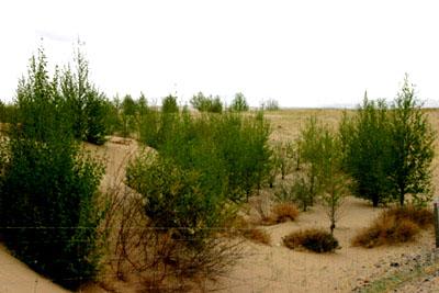 柴达木盆地的沙漠_虎狼族