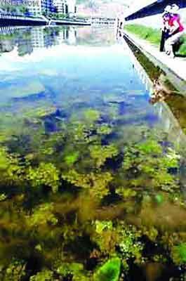 记者行程3000公里 亲眼目睹黄河污染现状(组图)