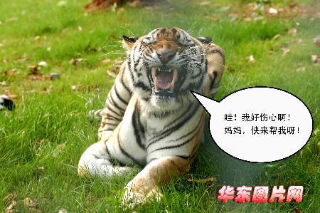 """组图:合肥大蜀山野生动物园""""猛兽物语"""""""