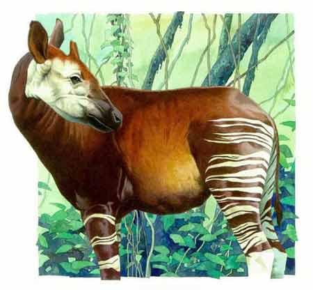 精美手绘动物 - 精彩贴图