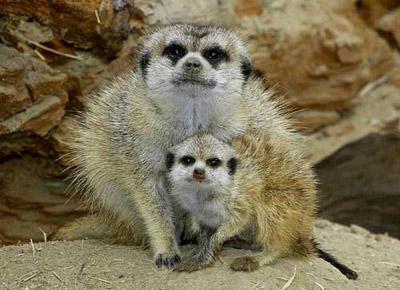 可爱的动物母子