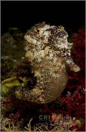 图片:海洋精灵~……-澳林春天-北京搜狐焦点业主论坛