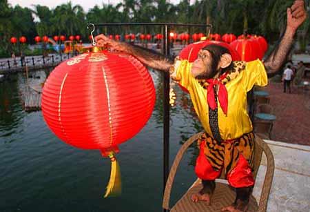动物世界家族闹中秋 猩猩挂灯笼老虎吃月饼(图)