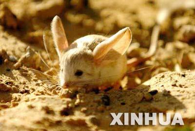 内蒙古野生动物生态链逐渐恢复[组图]