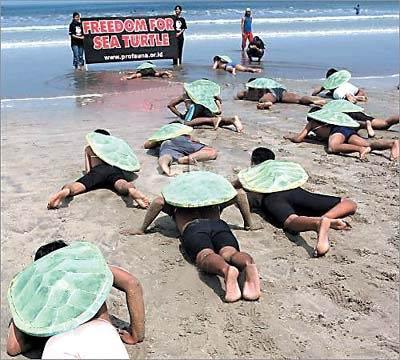 巴厘岛动物保护组织成员扮海龟爬行[图]