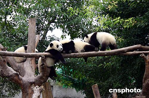 成都熊猫基地风景照