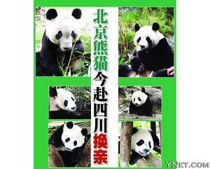 北京熊猫今赴四川换亲