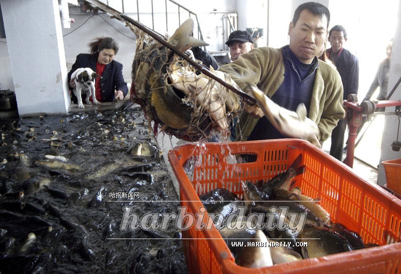 这里(哈尔滨博奇鲜活水产品批发市场)成为哈市惟一的