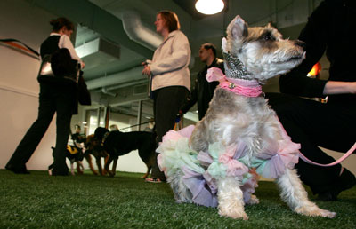 Pet care facility hosts Halloween party for dogs