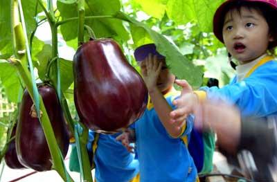 水果,花卉等17个品种,其中蔬菜类种子有黄瓜种子,小青瓜种子,西兰花