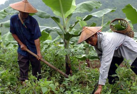 图文 德昂族农户的幸福生活 3