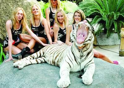 白-屁股-p_不仅如此,她们甚至还理了理白老虎屁股上的毛,导致白老虎仰天长啸.