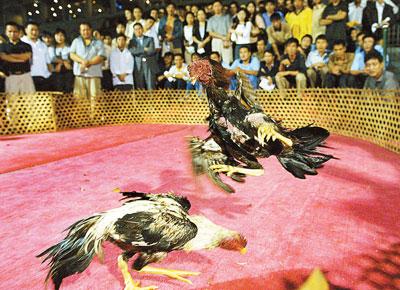 柳州观看首现漳州赛狗场场地免费斗鸡(图)深圳市民越野赛门票图片