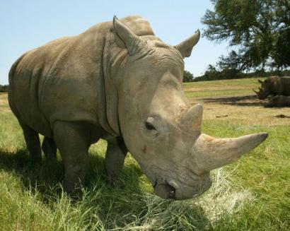 世界12种濒临灭绝动物的自嘲语录[组图]