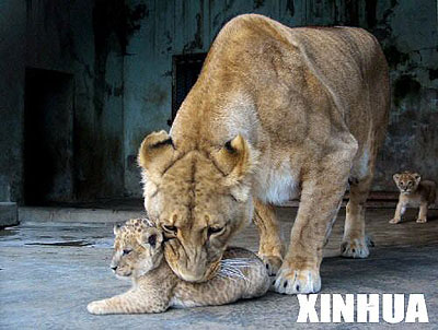 在江苏省南通市文峰公园动物园内