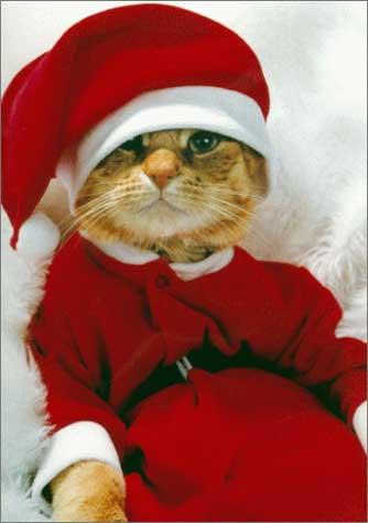 [奇趣]圣诞老猫
