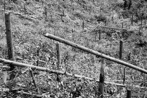 又见毁林伤农