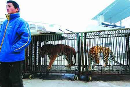 北京野生动物园内的安徽表演团演出场地,一名驯兽师在值班,他身后装在