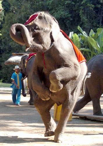 壁纸 大象 动物 353_500 竖版 竖屏 手机
