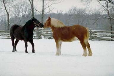 一组可爱的动物图片(1)